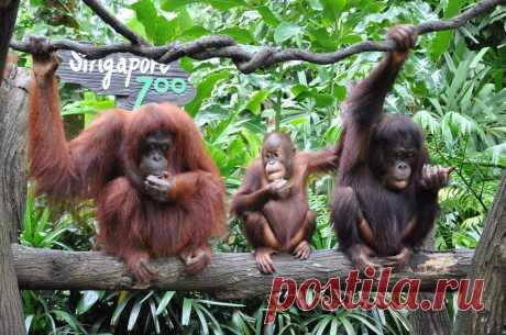Сингапур - животные вне клеток - Путешествуем вместе