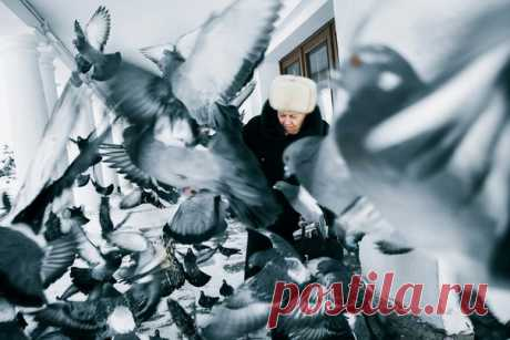 """Kind soul\"". Hungry pigeons wait for buyers at shop in hope that they will be fed. Suzdal. The author of a photo is Mikhail Kopychko: nat-geo.ru\/photo\/user\/298331\/"