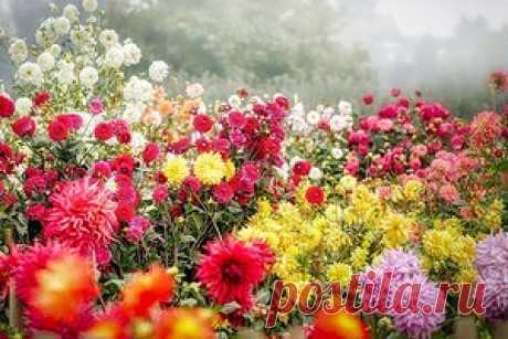 Какие цветы посадить осенью: посадка многолетников, луковичных цветов под зиму
