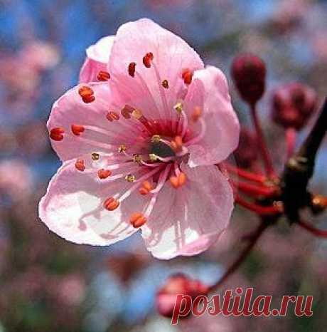 ГОРОСКОП НА МАЙ 2018 ГОДА. В мае вместе с торжеством всепобеждающей весны мы испытаем необыкновенный подъем и радость жизни. Все изменится к лучшему и заиграет новыми красками! Мы почувствуем огромный прилив сил и страстное желание любить, созидать и творить. ПРОЧИТАТЬ ПОЛНОСТЬЮ -