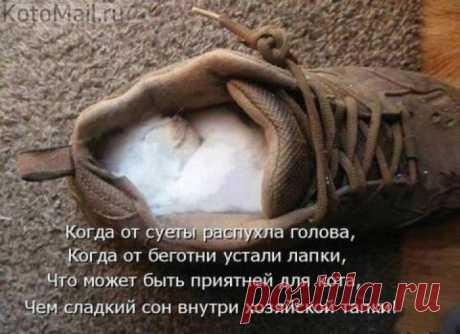 Пожалуй, я здесь посижу | KotoMail.ru