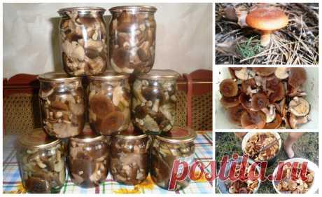 Грибы горькушки. Маринуем и консервируем В наших лесах растут грибы горькушки, которые многие грибники не собирают, считая эти грибы второсортными. Ну я считаю что нет второсортных грибов, есть только плохо приготовленные и ядовитые. Поэтому…