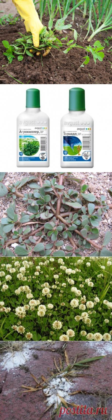 Как избавиться от сорняков и травы на участке народными средствами навсегда