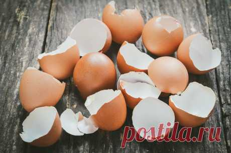 You are going to throw out an egg shell? This article will force you to change the mind!