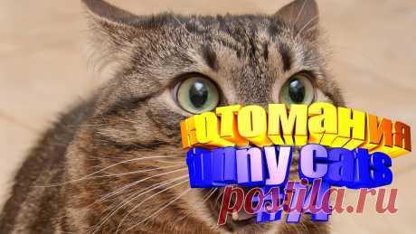 смешные коты видео, видео смешных котов, смешной кот видео, видео коты, кот том видео, приколы коты видео, коты воители видео, видео котов приколы, говорящие коты видео, видео смешные животные, видео животных смешные, видео смешное животные, смешно животные, про животных смешных, приколы с котами, прикол с котом, кота приколы, кошки видео смешное, кошки смешное видео, про кошек смешное, про смешных кошек, про кошек смешных, кошки смешное, смешное кошка видео, видео кошки смешные, смешные кошка