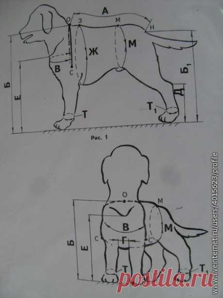La construcción de la ropa para los perros.