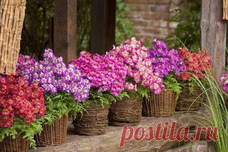 Выращиваю в саду потрясающе красивое растение – орхидею бедняка | Добрый дачник | Яндекс Дзен