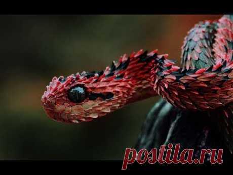 Змеи. Дикая природа. Самые ядовитые змеи мира. Snake. Wildlife.