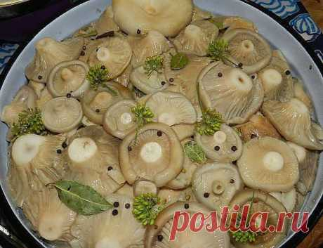 8 ВКУСНЫХ РЕЦЕПТОВ ЗАСОЛКИ ГРУЗДЕЙ!  1. Грузди, соленые на зиму. простой рецепт без добавления специй.  Для того чтобы приготовить грузди по этому старому и простому рецепту, нужно взять:  Соль крупная - 250 грамм; Грузди - 5 килограмм вымоченных грибов;  Собранные вами грузди нужно сначала хорошо почистить, убрать все места, которые вам кажутся подозрительными. Червивые участки нужно срезать, а также не оставлять те места, в которые есть проколы от хвои. После нуж...