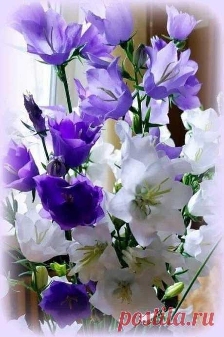 Радость , Цветы и Природа