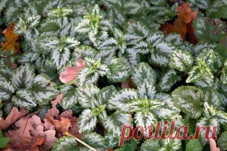 Почвопокровные растения для разных почв и участков сада. Фото