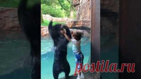 Дружелюбный медведь подыграл мальчику и попрыгал вместе с ним