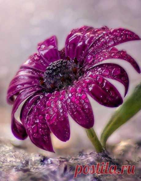 Назначение красоты — дарить человеку РАДОСТЬ.