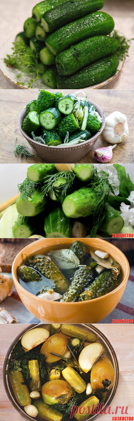 Six best recipes of fresh-salted cucumbers for every taste