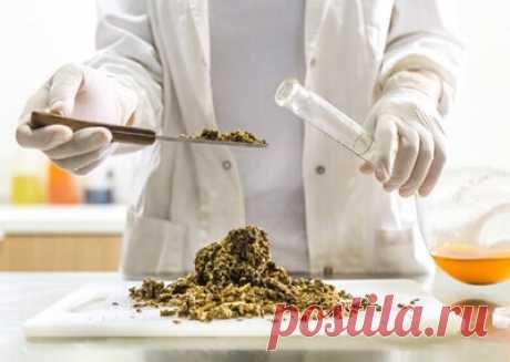 Как облегчить симптомы панкреатита с помощью настойки прополиса Чем прополис и настойка из него поможет поджелудочной и как лечить панкреатит с его помощью