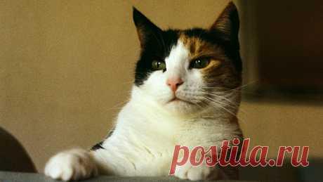 Болезни, которыми вас заразит любимый котик - новости на Здоровье Mail.Ru