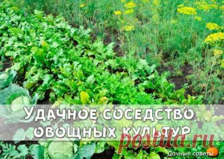 Удачное соседство овощных культур Овощи — хорошие соседи для огурцов — фасоль, чеснок, капуста, лук; для чеснока — огурцы, морковь, помидоры; для моркови — капуста, редис, свекла, помидоры, но лучше всего лук; для помидоров — чеснок, капуста, лук, редис. Овощи — плохие соседи для огурцов — редис, помидоры; для чеснока — фасоль, горох, капуста; для помидоров — огурцы, горох, картофель.