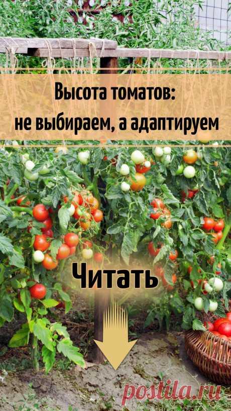 Высота томатов: не выбираем, а адаптируем