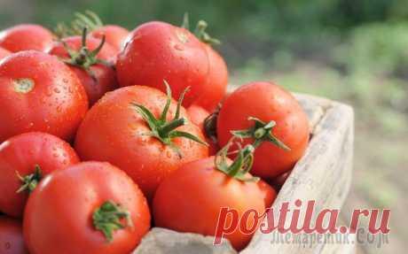 Секреты крупных томатов Если ваши помидоры из года в год не радуют крупными плодами, быть может, вы не во всем придерживаетесь правил ухода? Давайте разберемся, как правильно ухаживать за томатами. Помидоры, выращенные на св...