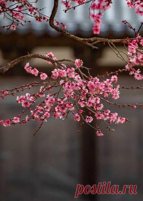 Сними с души ты прежнюю усталость... Вдохни весны пришедшей аромат...