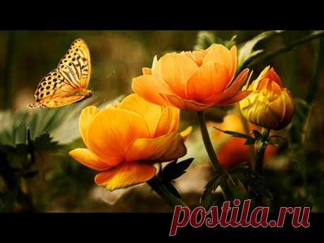 Музыка для Души и Цветы 2 (Beautiful flowers) !!!