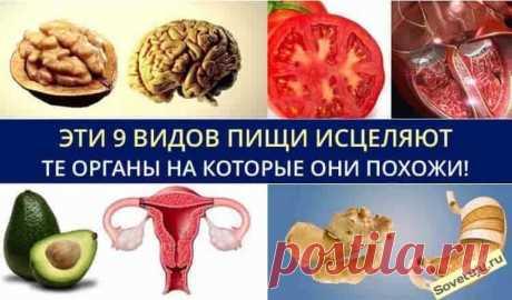 Эти 9 видов пищи исцеляют те органы, на которые они похожи! Эти 9 видов пищи исцеляют те органы, на которые они похожи!Удивительная связь с внешним видом пищи и его целебными для человека свойства