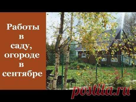 Дачникам: основные работы в саду и огороде в сентябре