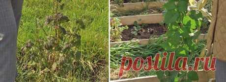 При перекопке одной сотки садоводы переворачивают 25 м³ грунта