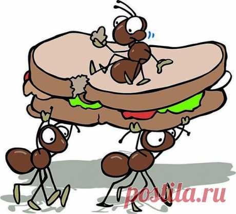 Чтобы избавиться от муравьев на кухне Полезные советы