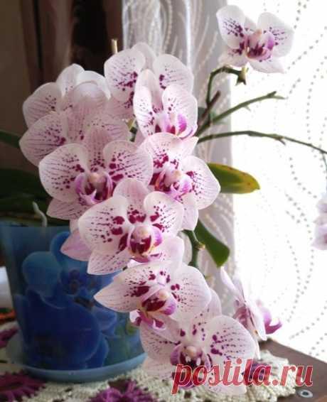 5 правил ухода за орхидеями для цветения круглый год. | Klumba-plus.ru | Яндекс Дзен