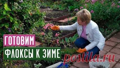 ФЛОКСЫ 🌸 Обрезаем, подкармливаем, готовим к зиме / Садовый гид