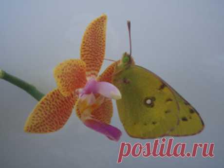 ЧаВо по уходу за орхидеями — Клуб любителей орхидей