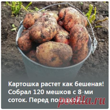 Картошка растет как бешеная! Собрал 120 мешков с 8-ми соток. Перед посадкой...ᅠᅠᅠᅠᅠᅠᅠᅠᅠᅠᅠᅠᅠᅠᅠᅠᅠᅠᅠᅠᅠᅠᅠᅠᅠᅠᅠᅠᅠᅠᅠᅠᅠᅠᅠᅠᅠᅠᅠᅠᅠᅠᅠᅠᅠᅠᅠ ᅠᅠᅠᅠᅠᅠᅠᅠᅠᅠᅠᅠᅠᅠᅠᅠᅠᅠᅠᅠᅠᅠᅠᅠᅠᅠᅠᅠᅠᅠᅠᅠᅠᅠᅠᅠᅠᅠᅠᅠᅠᅠᅠ  ᅠᅠᅠᅠᅠᅠᅠᅠᅠᅠᅠᅠᅠᅠᅠᅠᅠᅠᅠᅠᅠᅠᅠᅠᅠᅠᅠᅠᅠᅠᅠᅠᅠᅠᅠᅠᅠᅠᅠᅠᅠᅠᅠᅠᅠᅠᅠ ᅠᅠᅠᅠᅠᅠᅠᅠᅠᅠᅠᅠᅠᅠᅠᅠᅠᅠᅠᅠᅠᅠᅠᅠᅠᅠᅠᅠᅠᅠᅠᅠᅠᅠᅠᅠᅠᅠᅠᅠᅠᅠᅠ   ᅠᅠᅠᅠᅠ| буклированная пряжа |