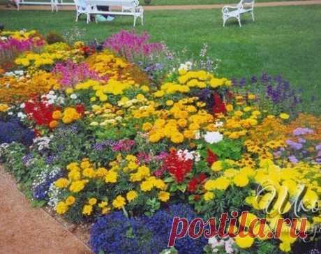 ТОП Цветов для летней клумбы
