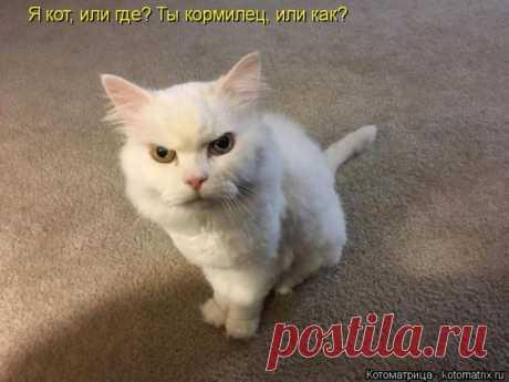 Лучшие котоматрицы недели (50 фото) Прикольные картинки от сайта Котоматрица.