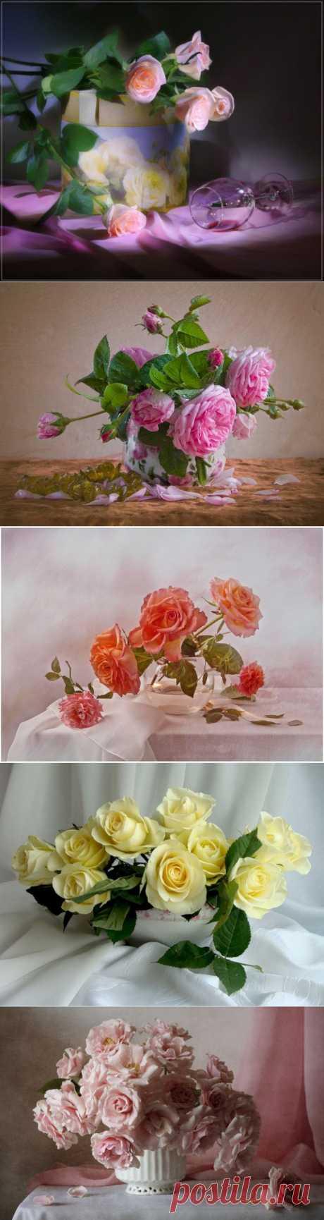 Натюрморты Шикарные розы