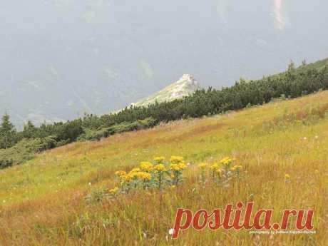 Чорногора ...Пощастило сьогодні :краса навколо така,що до опису не надається 💚