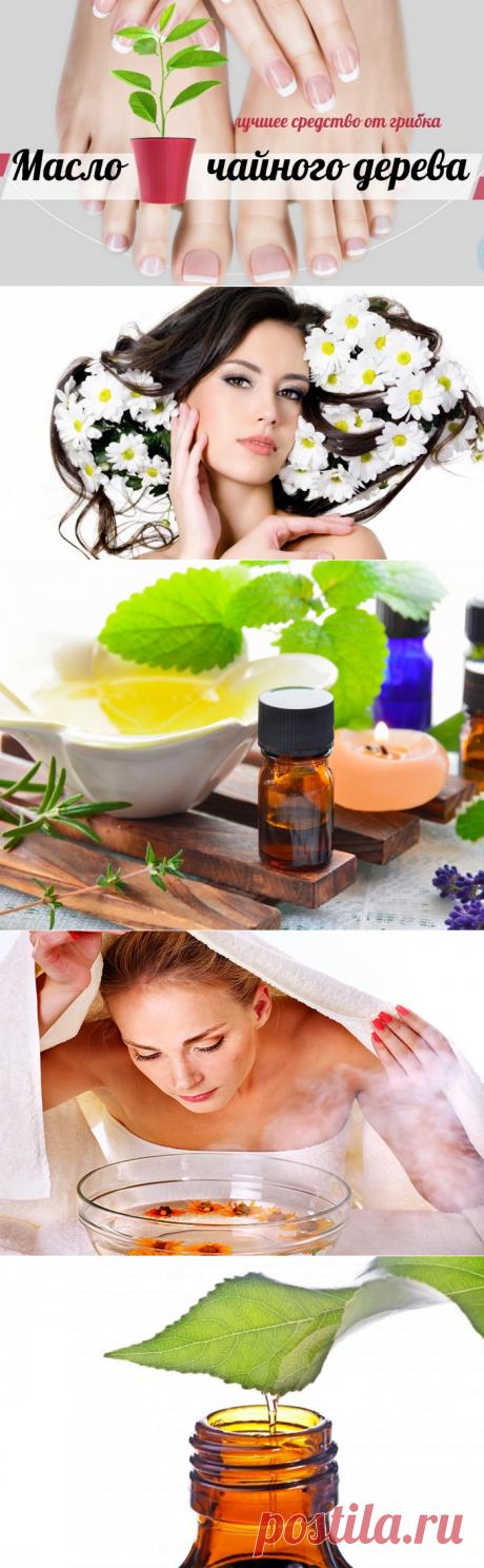 Волшебное масло чайного дерева. Способы применения масла чайного дерева для красоты и здоровья