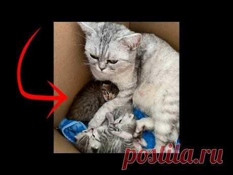 «Нам этот урод не нужен»: у шотландской кошки родился рыжий котенок, хозяйка просто вышвырнула его