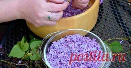 Пока цветет сирень, заполните банку растительным маслом и фиолетовыми цветками… Захватывающий волшебный аромат сирени невозможно забыть! Нежный и сладкий запах цветущих весенних садов наполняет нас приятными ощущениями.