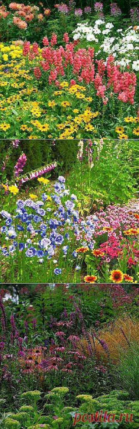 Красивые цветы на даче -подробно о посадке и уходе: Цветник из многолетников (продолжение) - 2012elena@bk.ru - Почта Mail.Ru