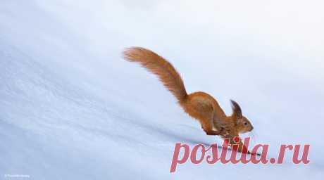 Прыжки в длину. Автор фото – Сергей Полюшко: nat-geo.ru/photo/user/60913/