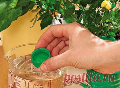Простые и действенные способы удобрения домашних растений Есть много замечательных способов подкормить домашний «лес», буквально тем, что под рукой. Сегодня я представляю некоторые из них.    1. Подкормка сахаром1 чайную ложку сахара равномерно насыпают на…