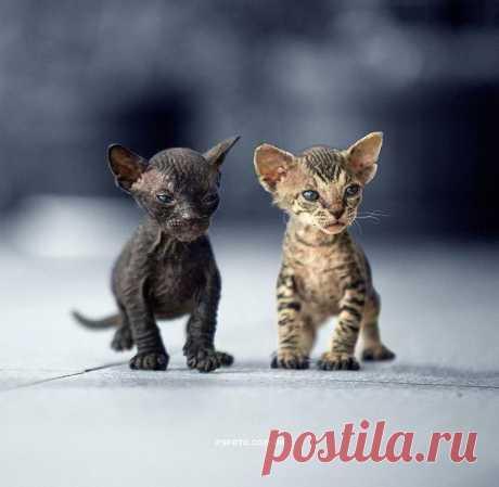 Восхитительные фотопортреты животных
