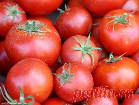 Тайны выращивания томатов