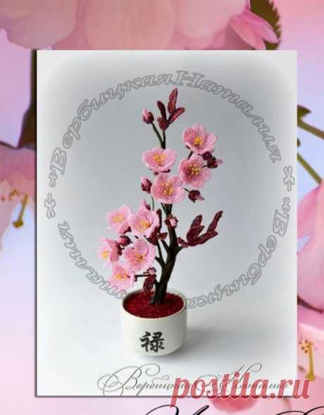 Цветение прекрасной сакуры