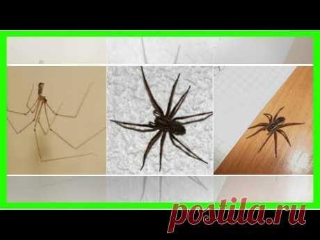 Больше никаких пауков в доме! Этот трюк слишком прост, чтобы не знать о нём!