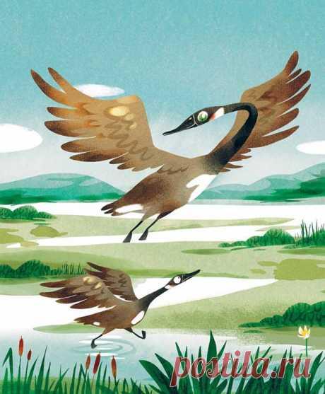Некоторые птицы и люди пасуют перед трудностями. Но дикие утки выдерживают долгий перелёт. В этом им помогают решимость и взаимовыручка. Они меняются местами, чтобы дать друг другу отдохнуть. Бранта тоже очень старается: когда поднимается сильный ветер, она продолжает лететь впереди стаи, хотя крылышки у неё ещё маленькие. Так она учится преодолевать препятствия. Тот, кто быстро сдаётся, редко бывает счастливым. Цитата и иллюстрация из «Книги про счастье» → mif.to/rGNtu