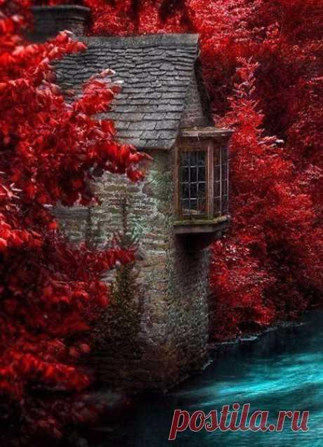 Таинственный красный лес