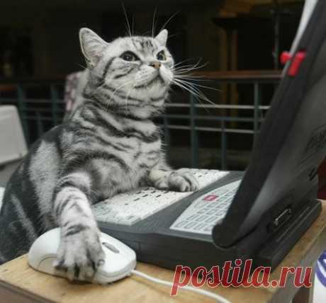 У некоторых котов есть мозги, но пользоваться ими они всё равно не умеют...